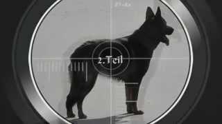 """Personensuchhund  """"Annabell""""  (2.Teil)"""