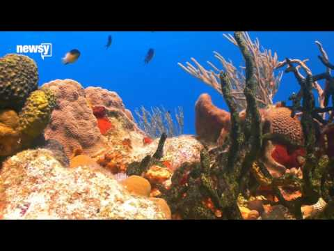 Turns Out Your Sunscreen Could Be Killing Coral Reefs - Newsy