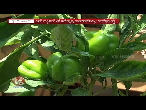 Public Shows Interest On Fiber Tubs For Roof Gardening   Special Story   V6 News