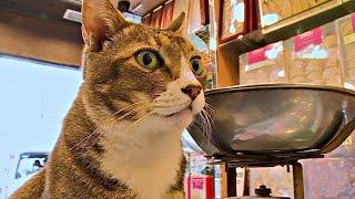 Проект голландского фотографа: кошки в магазинчиках Гонконга (новости)