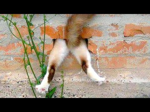 Funny CAT FAILS that will make you POOP YOUR PANTS FROM LAUGHING – Best CAT compilation