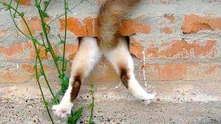 hilarious cat fails
