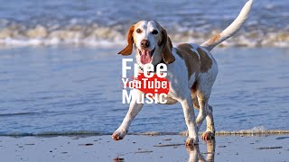 Free Dog - Silent Partner (Alternative & Punk | Bright) - Free YouTube Music