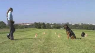 Rottweiler- Shepherd Obedience & Tricks