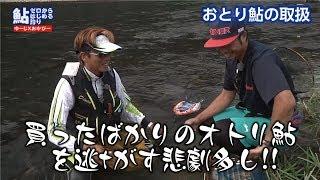 ゼロからはじめる鮎釣りVOL.4「オトリ鮎取扱篇」