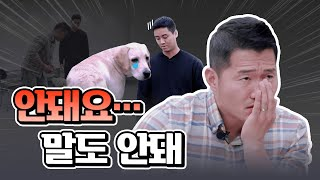 Whose dog is this? Kang trainer's Beginner dog parent Training story | backstreet dang dang Hongdae
