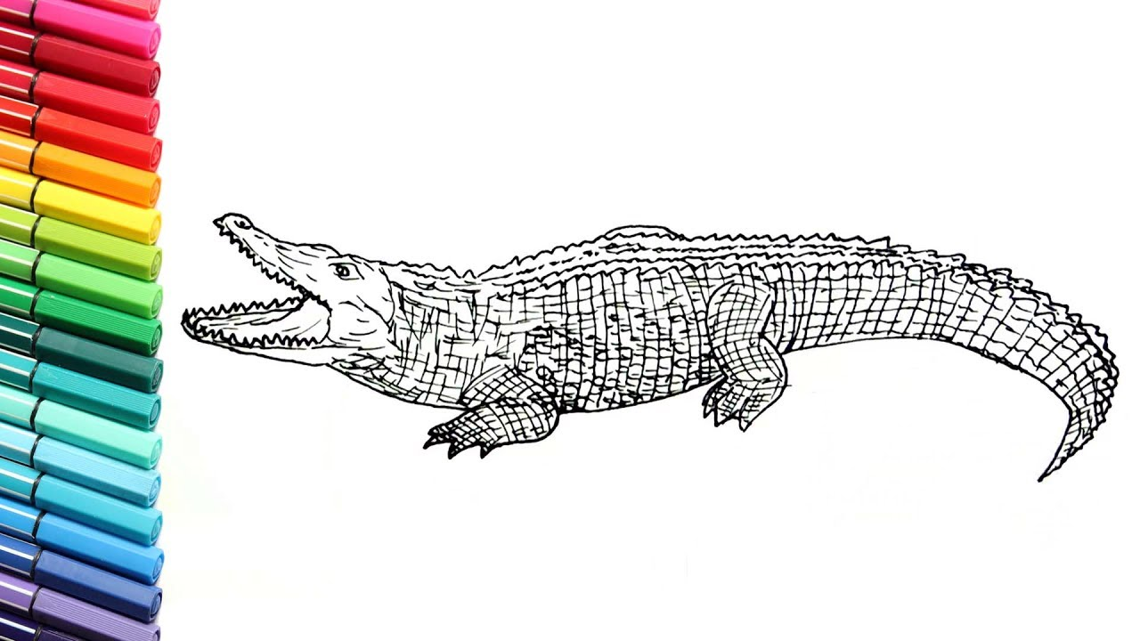 Drawing and coloring crocodile learn to draw wild animals color pages for children