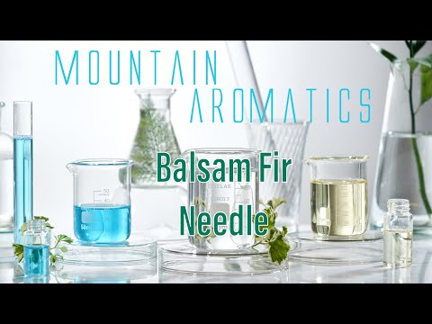 balsam-fir-needle--creating-your-own-perfume-at-home---essential-oil