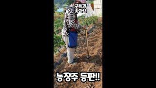 농장 신문물로 콩심는 엄마