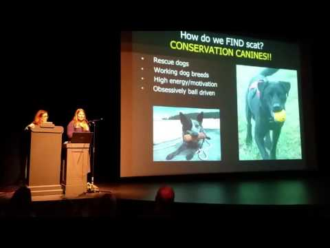 Superpod 5 - Conservation Canines: SRKW Scat Study