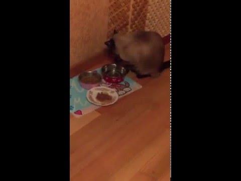 Коты, как люди