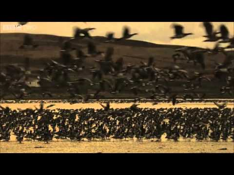 Goose Hunt   Hebrides  Islands on the Edge   BBC Two