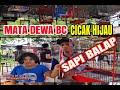 Mata Dewa Bc Cucak Hijau Sapi Balap Keren  Mp3 - Mp4 Download