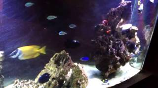 saltwater aquarium fish only crystal clear water after 10 days of uv sterilizer