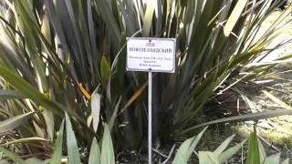Абхазия   Сухум, Ботанический сад 7