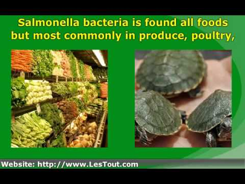 the symptoms prevention and treatment for cases of salmonella infection Every year, approximately 42,000 cases of salmonellosis are reported in the   learn more about salmonella infection and find tips on how to avoid it by  with  impaired immune systems, call your doctor if symptoms last more than a few days  sources: denver public health, centers for disease control and prevention.