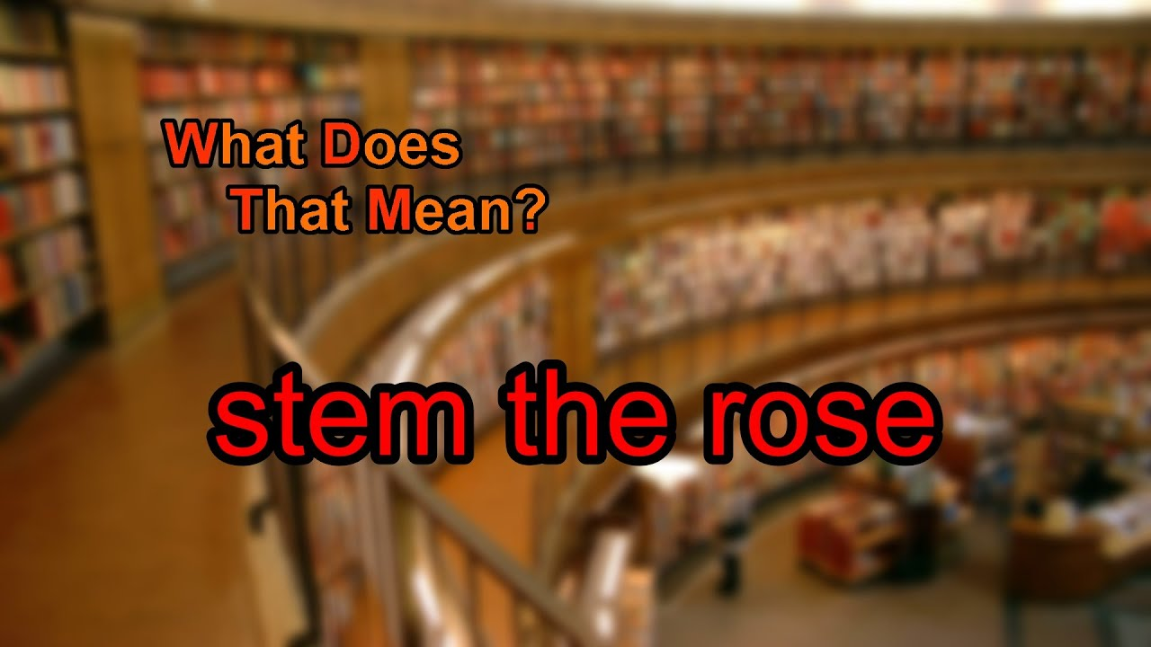 What does stem the rose mean youtube what does stem the rose mean buycottarizona Choice Image