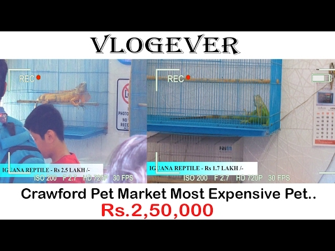 Crawford Pet Market Mumbai | Cheap As Well As Expensive Animal's | Vlog 01