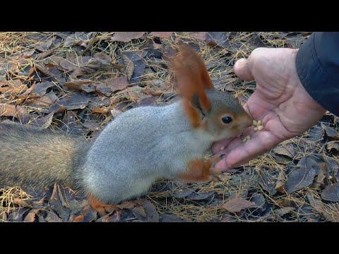 Download 14 CRAZIEST Animal Fights Caught On Camera Les écureuils sont des super-héros السناجب أبطال خارقين