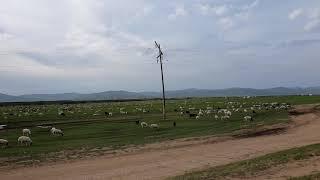 몽골초원 풍경( Mongolian grassland)