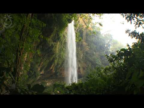 🎧 Waterfall & Jungle Sounds - Relaxing Tropical Rainforest N