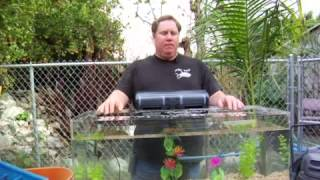 How To Grow Aquarium Plants