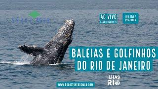 Baleias e golfinhos na nova fase do Projeto Ilhas do Rio  - VERDE MAR AO VIVO #41