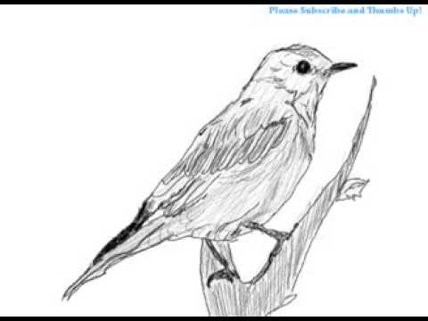 How to draw a bird on a branch - YouTube