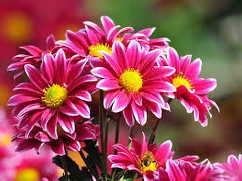 Flores Colombianas Con Reconocimiento Mundial Tvagro Por Juan