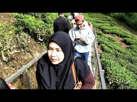 A visit to Cameron Highland  June 2017