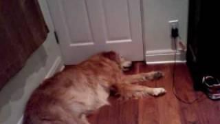 Dog Snoring Loudly