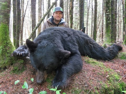 New Brunswick Black Bear Hunt Part #2