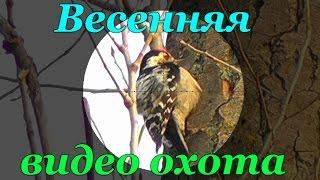 Весенняя видео охота Река Северский Донец, Харьковская область