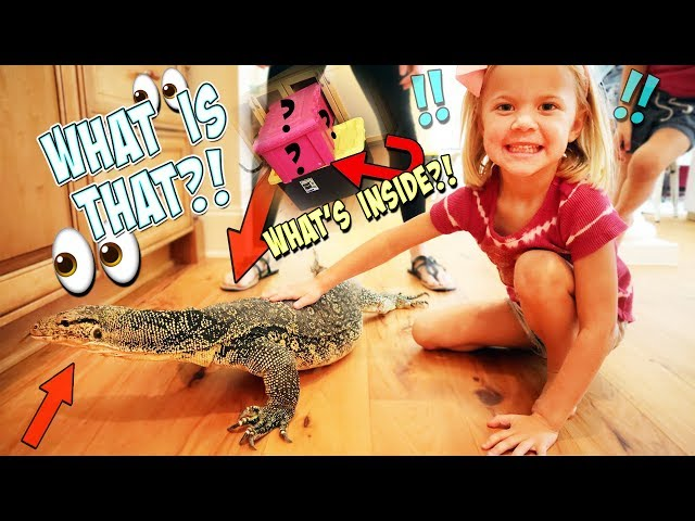 RORY'S 5TH  BIRTHDAY!! SURPRISE MYSTERY BOX!! WHAT'S INSIDE?!