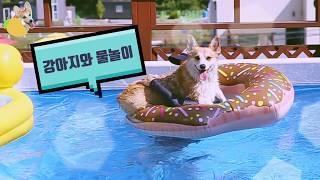 강아지는 물 속에서 어떤 모습일까? 웰시코기 수영 영상