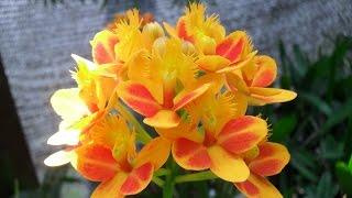 Cómo Cultivar Orquídeas Tvagro Por Juan Gonzalo Angel
