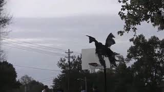 Halloween Funny !!!!!