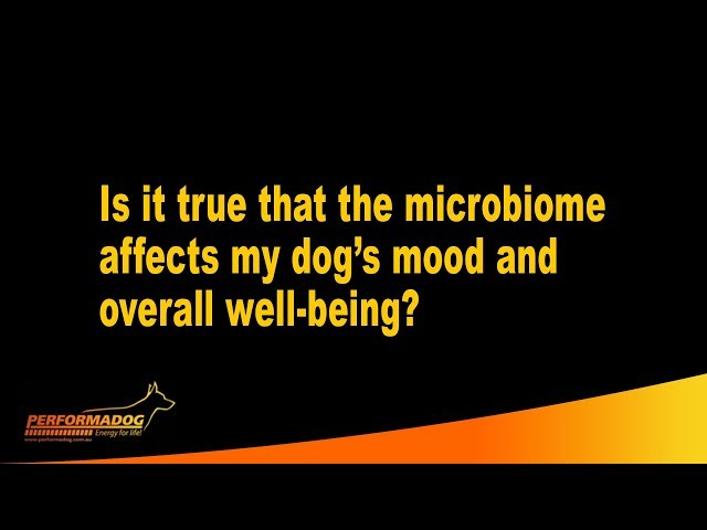 Is it true that the microbiome affects my dog's mood and overall well being?