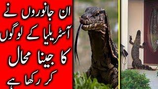 Australia k in janwaro ney logon ko mushkil mei dal rakha hai آسٹریلیا کے خطرناک جانور | Urdu Files