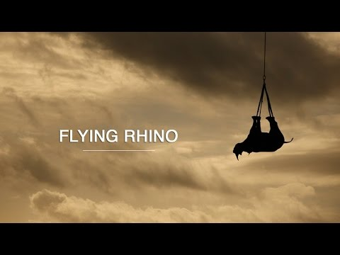 Flying Rhino - Green Renaissance