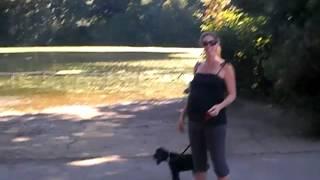 Casey Cocker Spaniel At Dog Pond Prospect Park Brooklyn Ny