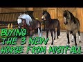 Buying The 3 New Horses From Mistfall StarStable Update mp3