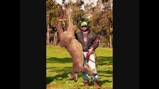 Biggest Kangaroo ever shot
