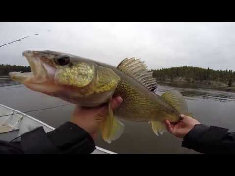 Spring Walleye On The Churchill River System