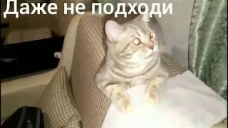 Говорящие коты! Лучшая подборка #2 Кот говорит отойди (Все серии)