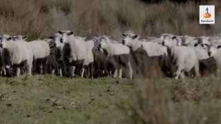Sustainable Farming in New Zealand