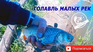 Голавль Малых Рек