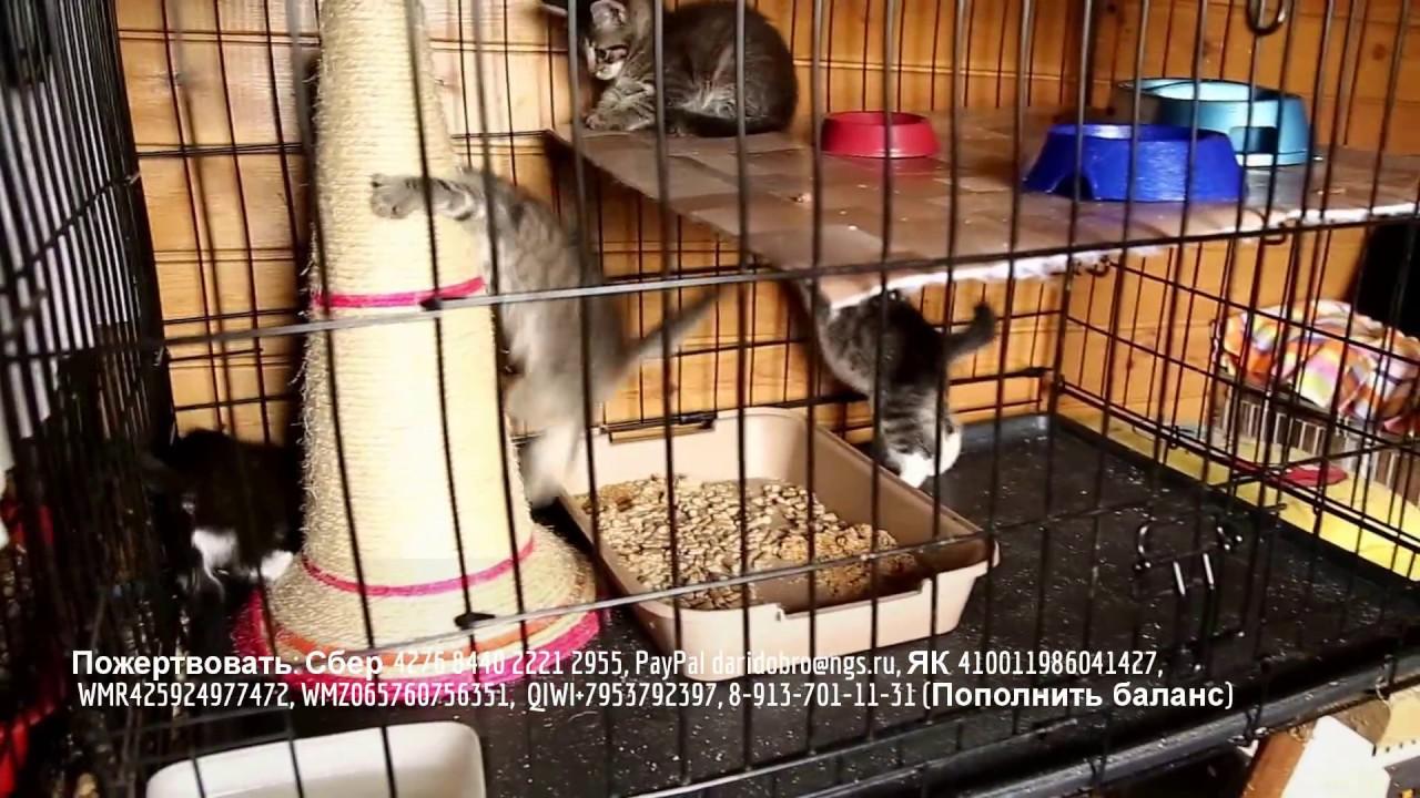 Котята и кошки бесплатные объявления от частных лиц в новосибирске с фото, ценами и описаниями кошек и котят. Большая база предложений от питомников и частных лиц в новосибирске. Подать объявление можно бесплатно и без регистрации.