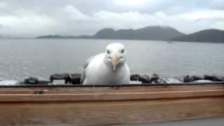 видео Остров Рунде