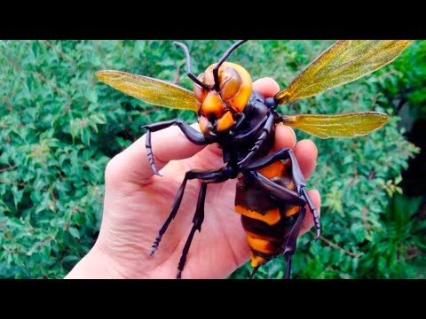 ABD'nin Yeni Kabusu Katil Arılar